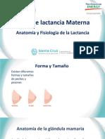Anatomía y fisiología de la lactancia Rio Gallegos