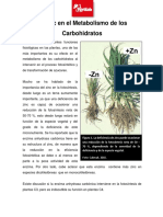 Zinc en el Metabolismo de Carbohidratos