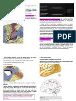 Anatomia funcional do córtex.pdf