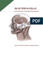 Testa Collo - Blocco 2a Ed