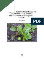 Relatia microorganismelor parazite cu plantele radacinoase Beta vulgaris L. –  sfecla