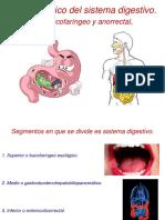 Examen físico del sistema digestivo.