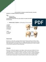 kinesiologia cabez craneo