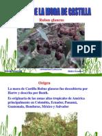 cultivo-mora-castilla