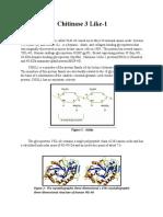 CHI3L1 Protein