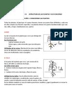 Ciencias Naturales Las plantas 4to.docx