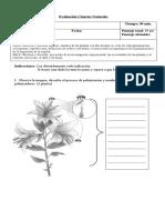 Evaluación II Reproducción y Ciclo de las plantas