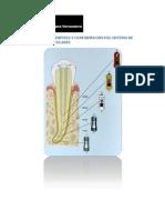 Limpieza y ion de Conductos Radiculares