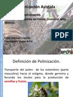 Presentacion de Polinización asistida BPD.pdf