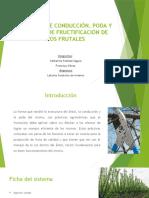 Sistemas de Conducción y Poda de Formación de Frutales