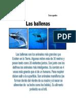 Anexos de Español_Las ballenas                                                                                           Texto expositivo
