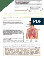 El proceso de respiracion junio 9 al 11 grado quinto