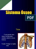 06 - Sistema Ósseo