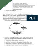 Ficha Preparação Exames.docx