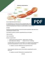trauma segundo parcial resumen.pdf