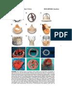 SDL 20 Prosthetic Heart Valves BMS16091064