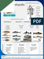 Título de infografía.pptx