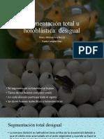 Segmentación holoblastica total desigual