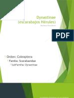 Dynastinae. Presentación.