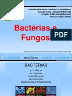 102082-Bacterias_e_fungos