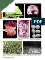 18-influenza-fr.pdf