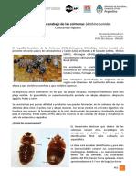 PEC_Bulacio_MOOC.pdf