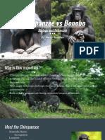 Henry's Chimpanzee vs Bonobo Final Project