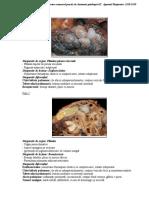 1.-handout-examen-practic-respirator-2018-2019.pdf