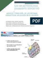 FISIOLOGIA DE LOS SISTEMAS   ENERGETICOS