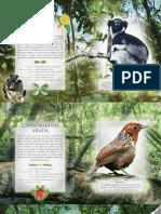 pages-from-interior-glasuri-din-padurea-ecuatoriala