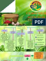 AGENCIA DE VIAJE CEIBOS TOUR.pptx