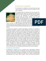 CULTIVO DE CACAHUATE