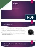 Manual Psilocybes Lulamushroom.pptx