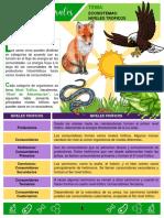 TALLER CIENCIAS NATURALES - GRADO 7º - ECOSISTEMAS NIVLES TROFICOS
