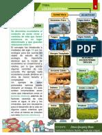 TALLER CIENCIAS NATURALES - GRADO 7º - LOS ECOSITEMAS