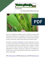 Plagas que Atacan a Las Gramíneas .pdf
