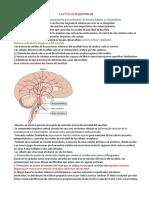 SEMINARIO 11 LIMBICO.pdf