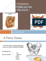 revisao_anatomia_do_assoalho_pelvico