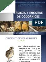 12. CRIANZA DE CODORNICES
