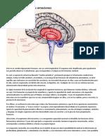 Bases cerebrales de las emociones