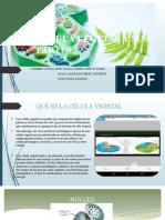 botanica celula vegetal.pptx
