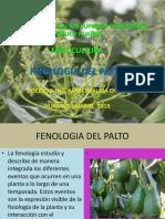 FENOLOGIA DEL PALTO