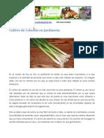 Cultivo del Cebollin en Jardinería
