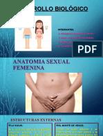 DESARROLLO BIOLÓGICO FEMENINO Y MASCULINO