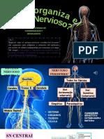 2ºmedio-sist nervioso+imp.nervioso 12 junio