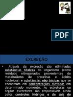 excrecao_comparada - Cópia (1).ppt
