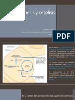 w4 Clase bioca Cetogenesis cetolisis xenob 20052020