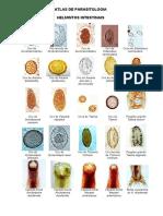 Atlas-de-Parasitologia