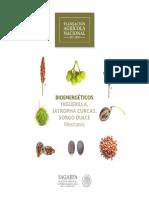 Potencial-Bioenerg_ticos.pdf