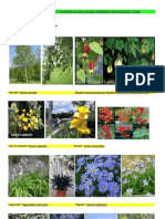 Arboles, arbustos y plantas exóticas en jardines urbanos de Chile